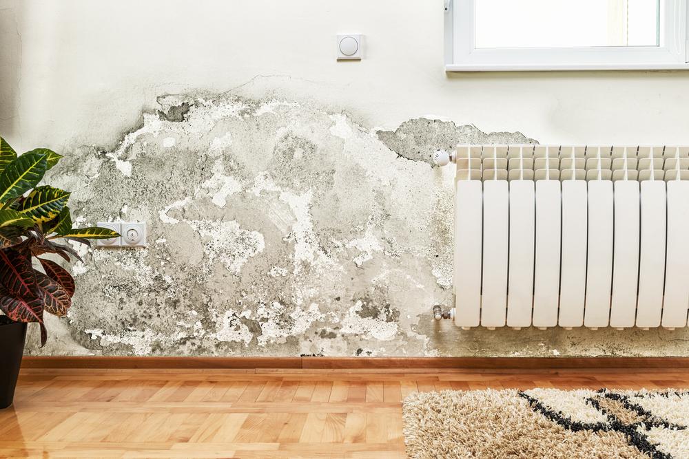 damp_wall